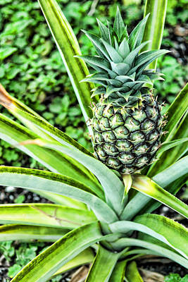 Pineapple Plant Print by Frank Feliciano