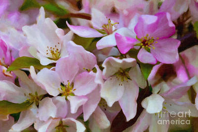 Pink And White Crabapple Blossoms Print by Donna Munro