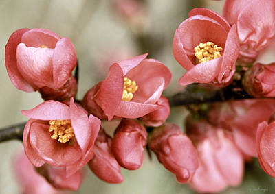 Pink Flower Branch Photograph - Pink Blossom by Y. Deshayes - Photography