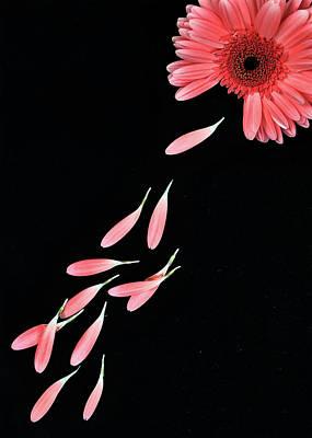 Pink Flower With Petals Print by Photo by Bhaskar Dutta