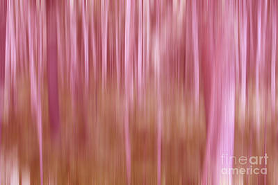 Pathway Digital Art - Pink Forest by Sharon Mau