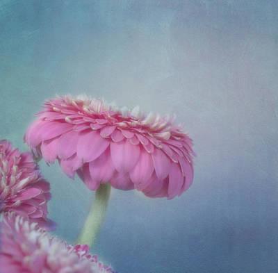 Garden Flowers Photograph - Pink by Kim Hojnacki