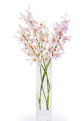 Pink Orchid In Vase Original by Atiketta Sangasaeng