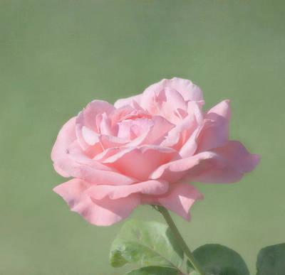 Pink Rose Print by Kim Hojnacki