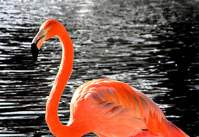 Flamingo Photograph - Pink Shock by Coconut Lime Design