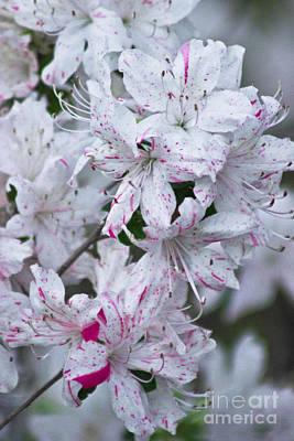 Pink Splattered Flowers Original by Alec Wallace