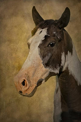 Horse Photograph - Pinto In The Mist by Susan Candelario