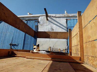 Animals Photograph - Pirat Cat And His Crew by Miki De Goodaboom