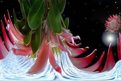 Planet Of King Protea Original by Terence Davis