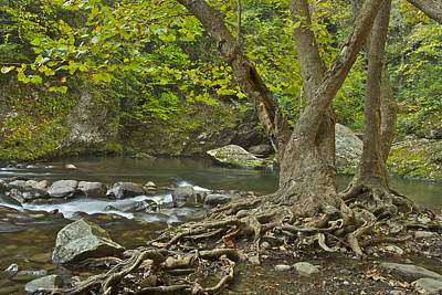 Planted By The Rivers Of Water Print by Michael Peychich