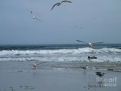 Wet Fly Digital Art - Playful Gulls by Laurence Oliver