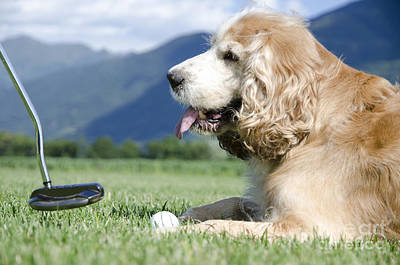 Playing Golf With A Dog Print by Mats Silvan