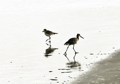 Bird Photograph - plover and Godwit by Marilyn Hunt