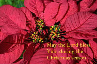 Poinsetta For Christmas Print by Linda Phelps