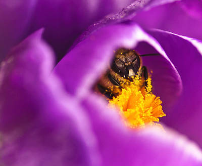 Pollination Party Of One Print by Vicki Jauron
