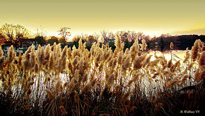 Pond Grasses Print by Brian Wallace