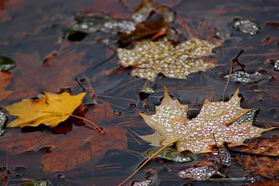 Pond Leaf Dew Drops Print by LeeAnn McLaneGoetz McLaneGoetzStudioLLCcom
