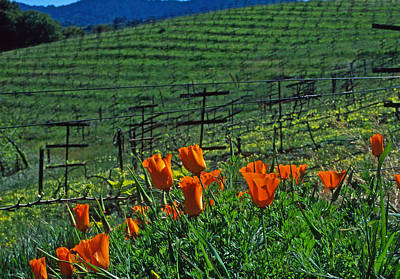 Poppies And The Vineyard Print by Kathy Yates