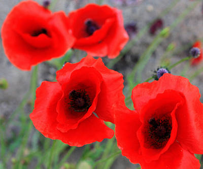 Poppies Of Stone Print by Jerry Cordeiro