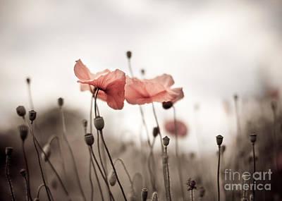 Poppy Flowers 03 Print by Nailia Schwarz