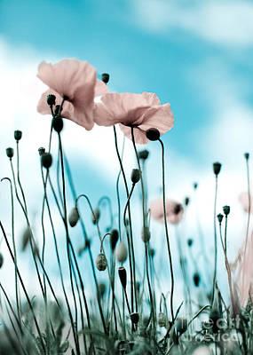 Poppy Flowers 09 Print by Nailia Schwarz