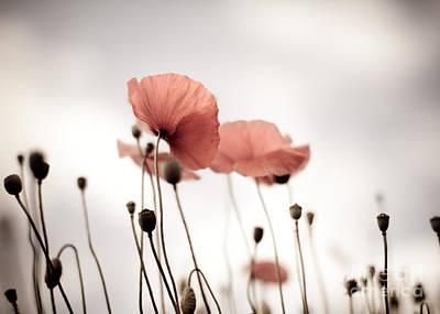 Poppy Flowers 16 Print by Nailia Schwarz