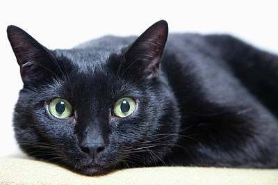 Green Eyes Photograph - Portrait Of A Cat by Sara Wight