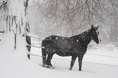 Horse Farm Maryland Photograph - Portrait Of A Horse In A Winter by Hibberd, Shannon