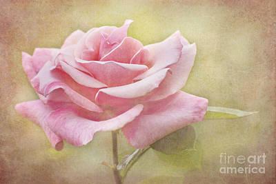 Portrait Of A Rose Print by Cheryl Davis