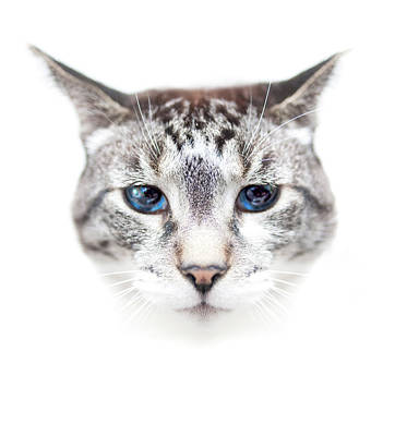 Of Cats Photograph - Portrait Of Cat by by Jonathan Fife