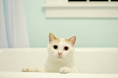Cats Photograph - Portrait Of White Cat by Melissa Ross