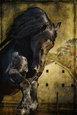 Power House Horse D1496 Print by Wes and Dotty Weber