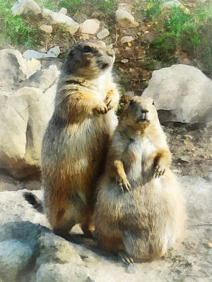 Prairie Dog Formal Portrait Print by Susan Savad