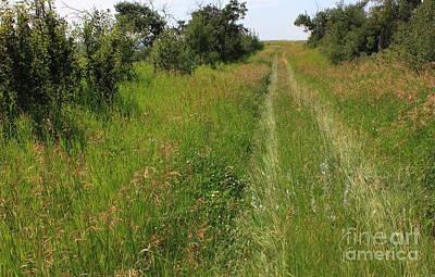 Prairie Trail Through Grasses Print by Jim Sauchyn