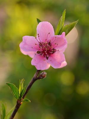 Pretty Pink Peach Print by JD Grimes