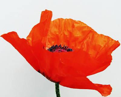 Pretty Poppy Print by Ramona Johnston