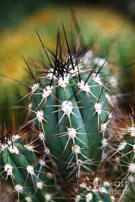 Leda Photograph - Prickly  by Leslie Leda