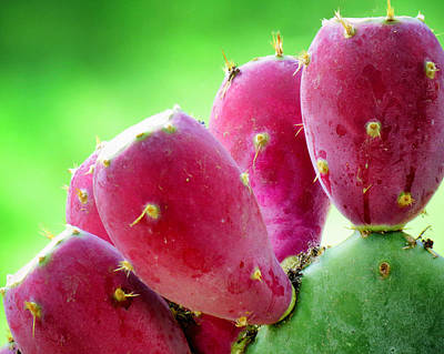 Prickly Pear Print by Diane Wood