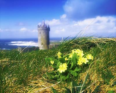 Doonagore Tower Photograph - Primrose Flower In Foreground by The Irish Image Collection