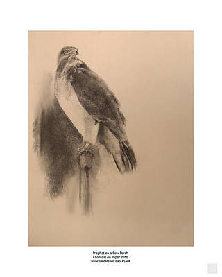 Buzzard Drawing - Prophet On A Bow Perch by Nance Mc Manus