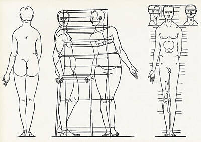 Proportions Of The Human Body Print by Sheila Terry