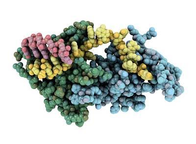 Protozoan Rna-binding Protein Complex Print by Laguna Design