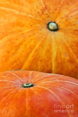 Biologic Photograph - Pumpkins Background by Carlos Caetano