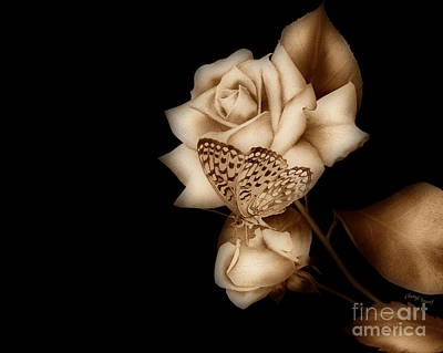 Purity Sepia Print by Cheryl Young