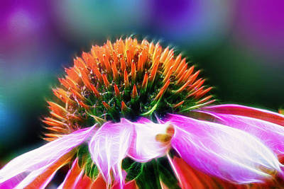 Abstracted Coneflowers Photograph - Purple Coneflower Delight by Bill Tiepelman