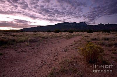 Purple Desert Sunrise Print by Matt Tilghman