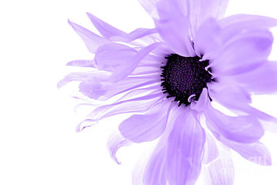 Floating Girl Photograph - Purple Flower by Angela Rose