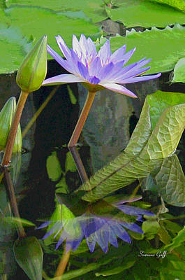 Purple Lotus Print by Suzanne Gaff