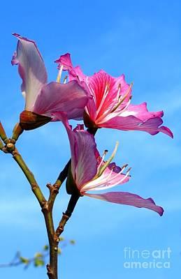 Purple Orchid Tree  Print by Yali Shi