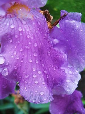 Purple Rain Print by Todd Sherlock